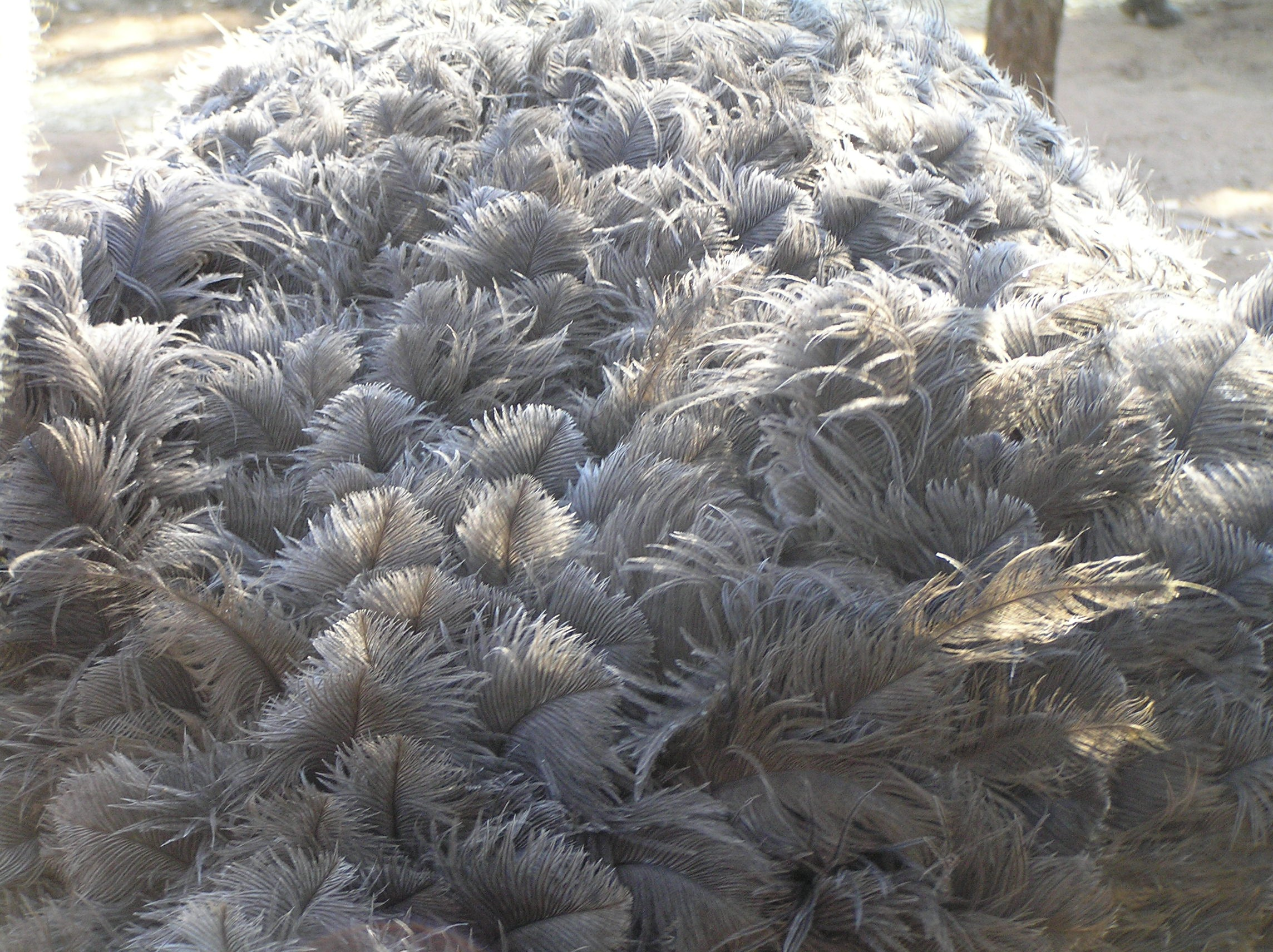 http://jbryant.eu/images/OstrichFeathers.jpg