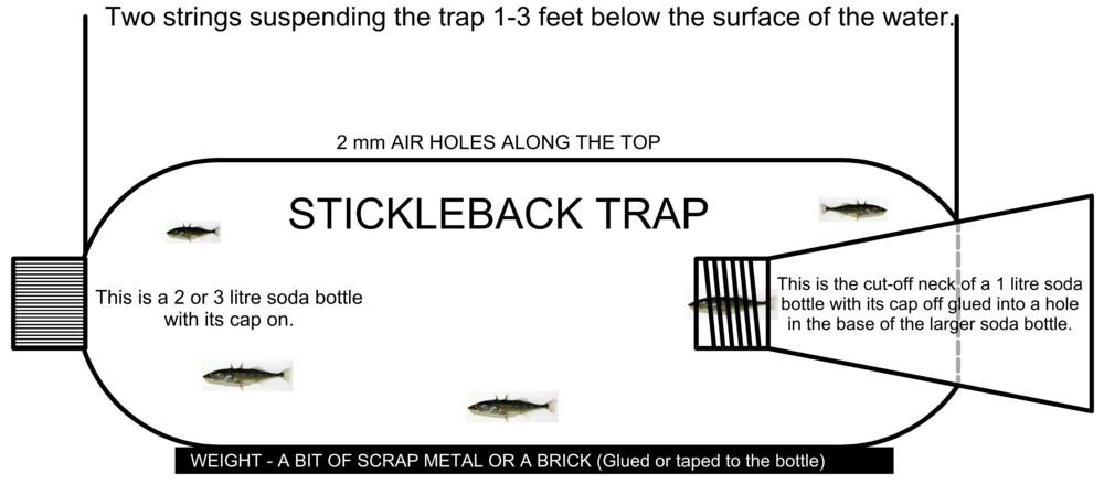Stickleback trap for Diy fish trap